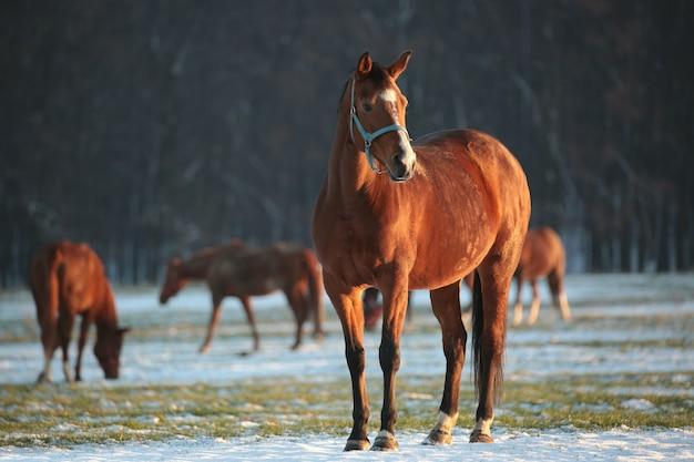 Cavallo su uno sfondo di alberi