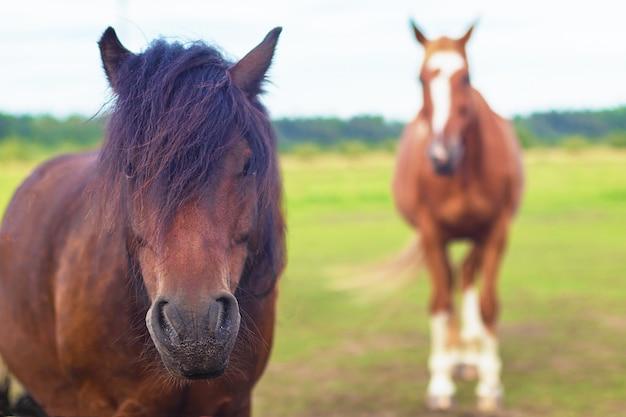 Cavallo e puledro marrone con criniera lussureggiante in fattoria pascolo