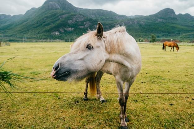 Cavallo che mangia sul pascolo