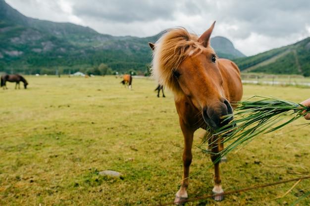 Cavallo che mangia nell'azienda agricola rurale