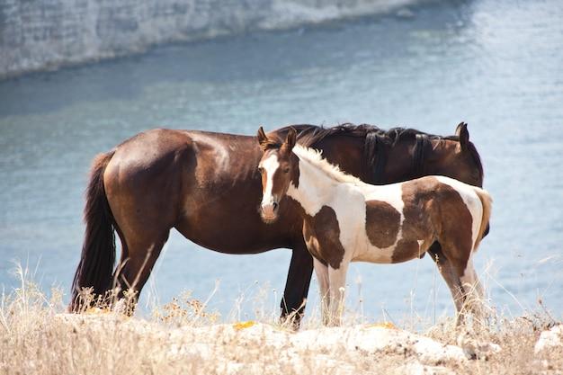 Famiglia di cavalli