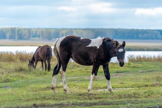 Cavallo e puledro nel prato. foto di alta qualità