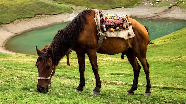 Cavalli al pascolo sulla collina vicino al lago