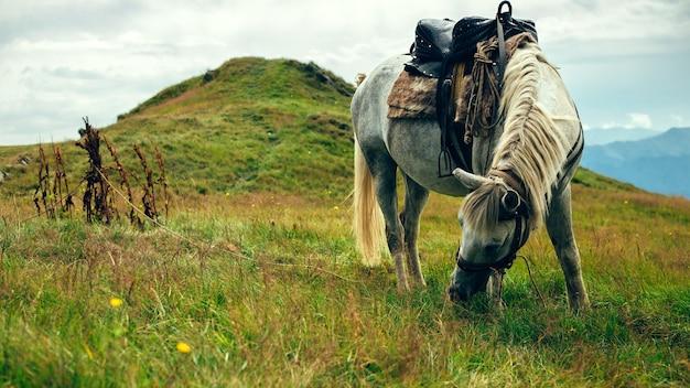 Cavalli al pascolo in collina