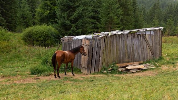 Il cavallo sfiora accanto a un dado di legno. natura verde paesaggio rurale.