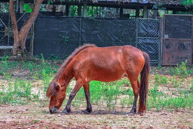 Cavallo al pascolo su un pascolo