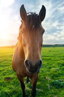 Fine della testa di cavallo in su al tramonto contro un cielo blu