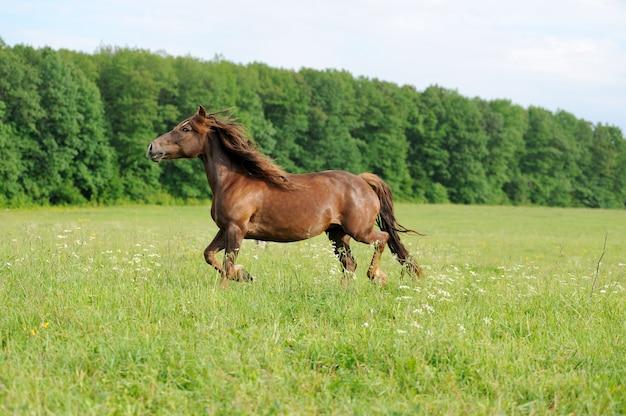 Cavallo in prato. giorno d'estate