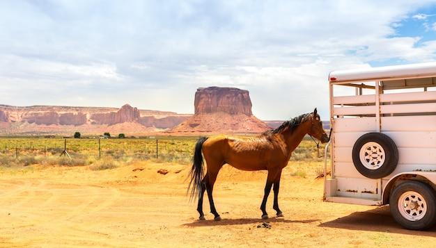 Cavallo vicino al rimorchio.