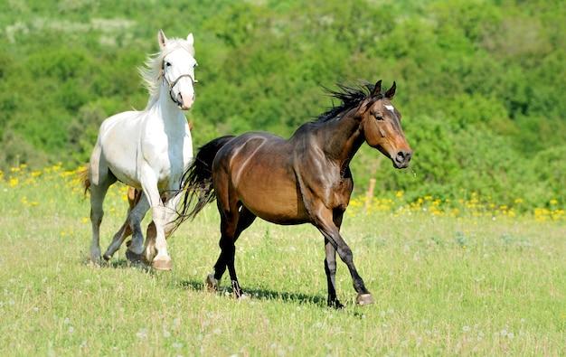 Cavallo che corre nel campo in una giornata estiva