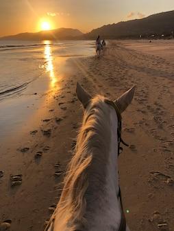 Cavallo che cammina sulla sabbia della spiaggia