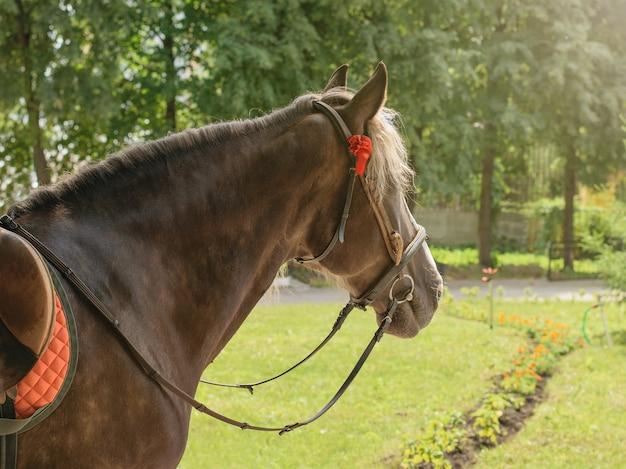 Cavallo con sella e finimenti nel parco. un bellissimo animale domestico.
