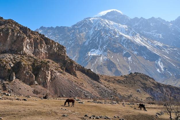 Un cavallo senza squadra cammina in un prato ai piedi delle montagne innevate. all'inizio della primavera il cavallo pascola in montagna.