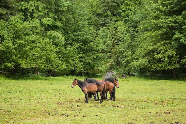 Cavalli nelle montagne alpine, via la foresta verde. passeggiata in una giornata estiva nella città di hallstatt, austria