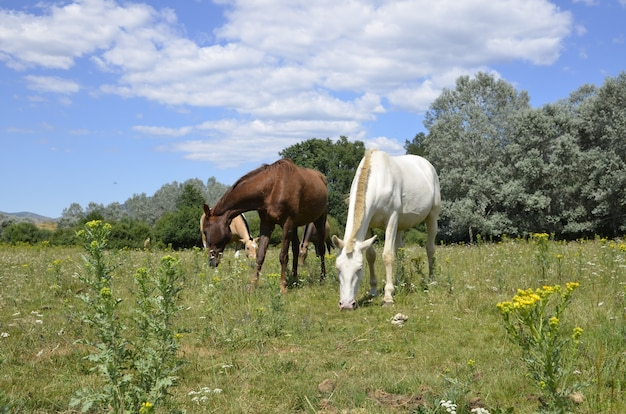 Cavalli in campo