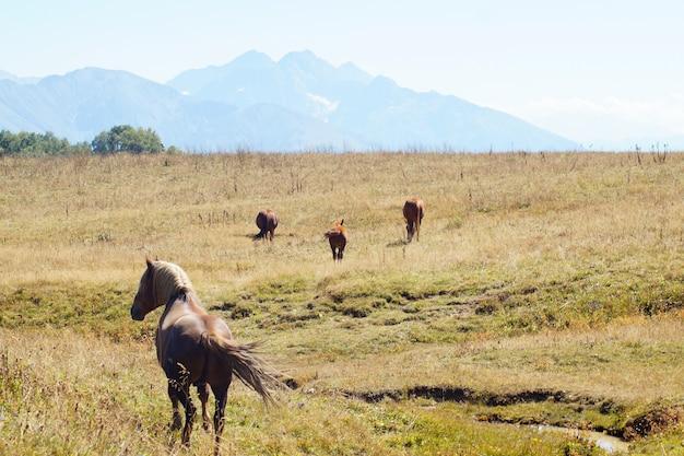 I cavalli pascolano vicino alla montagna al pascolo in autunno.