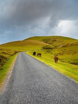 I cavalli pascolano sul ciglio di una solitaria strada di montagna che si inerpica tra verdi pascoli