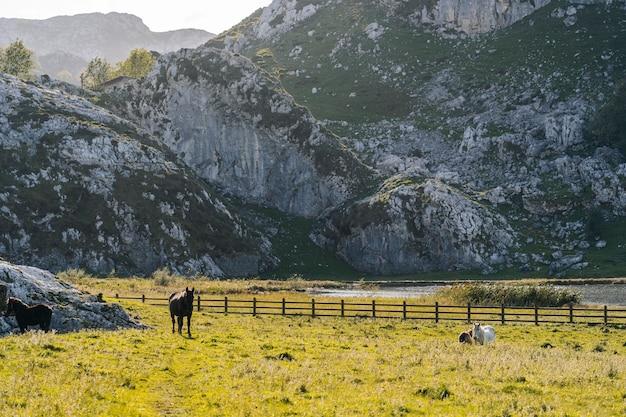 Cavalli al pascolo in un prato verde circondato da montagne