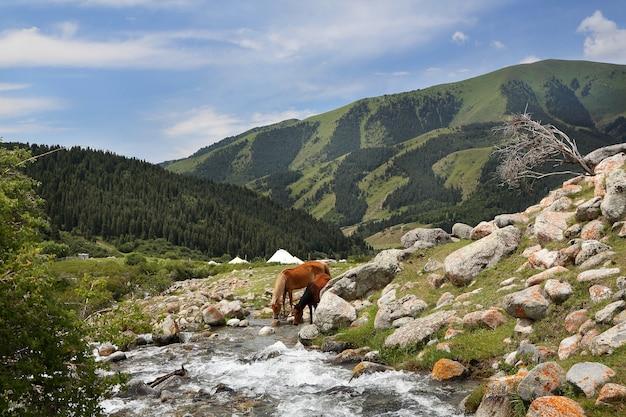 Cavalli al fiume di montagna in una giornata estiva.