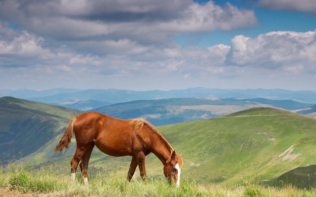 Cavalli in montagna