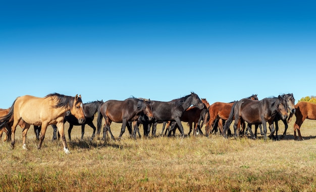 Cavalli nella prateria