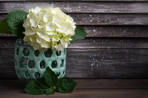 Fiori di ortensia in vaso
