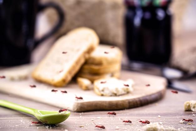Formiche domestiche che mangiano cibo avanzato su un tavolo sporco.