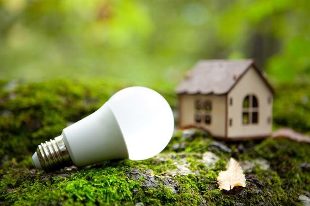 Casa e lampadina su muschio verde