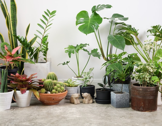 Piante da appartamento su pavimento di cemento e statua di elefante nella stanza bianca aria naturale purificare con monsteraphilodendron selloum cactuspalmoidezamioculcas zamifoliaficus lyrataspotted betelsnake plant