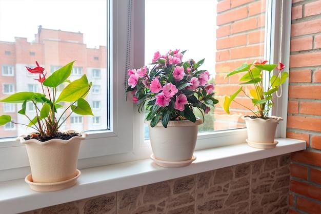Una casa piante in vasi di fiori sul davanzale della finestra giornata di sole