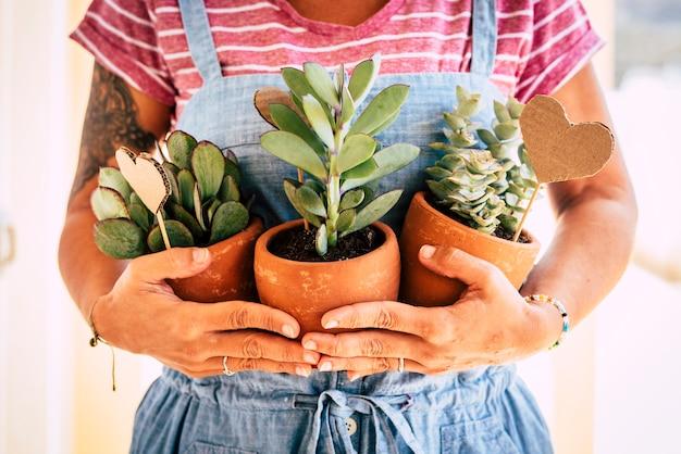 Casalinga che tiene tre piante tropicali tropical
