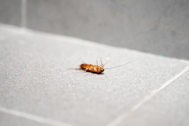 Un enorme scarafaggio sul pavimento. parassiti degli insetti in casa.