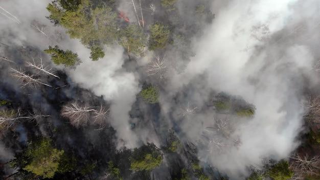 Enormi sbuffi di fumo scuro si alzano da un incendio boschivo.