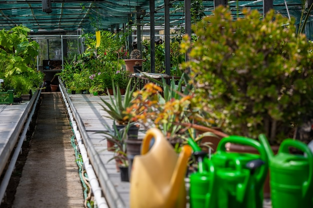 Enorme serra con piante e attrezzature per la manutenzione di piante o fiori, concetto di giardinaggio