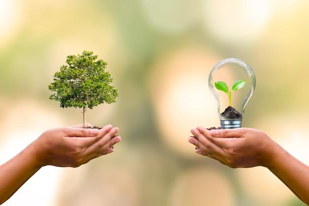 Alberi piantati a mano umana e piccoli alberi che crescono in lampadine su mani umane per conservare il concetto di conservazione ambientale della giornata della terra