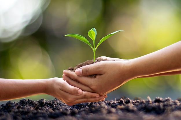 Le mani umane aiutano a piantare piantine nel terreno, il concetto di conservazione della foresta e piantagione di alberi.