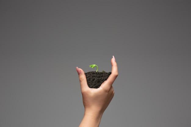 Mani umane che tengono una pianta verde fresca simbolo della crescente conservazione dell'ambiente aziendale e