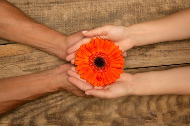 Mani umane che tengono insieme un tenero fiore estivo isolato su sfondo di legno con copyspace. umore primaverile, benessere, stile di vita sano, romantico, natura e concetto organico. spa, supporto, bellezza.