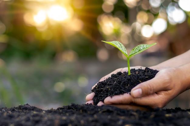 Mani umane che piantano alberelli o alberi nel suolo, concetto della giornata della terra e campagna di riscaldamento globale