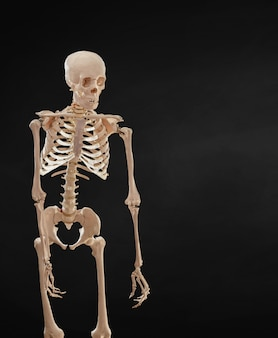 Scheletro umano isolato su sfondo nero.