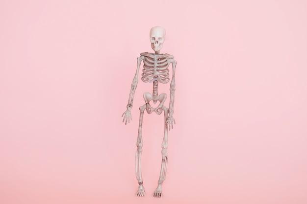 Scheletro umano isolato su uno sfondo rosa tenue