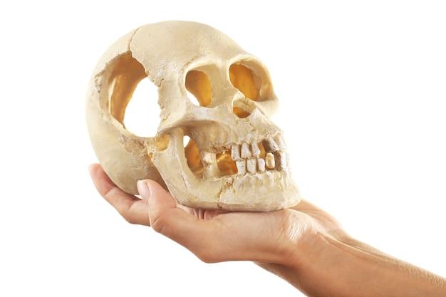 Cranio umano in mano isolato su bianco