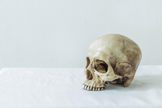 Cranio umano su uno sfondo bianco