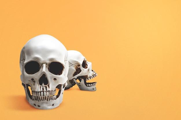 Cranio umano con uno sfondo colorato