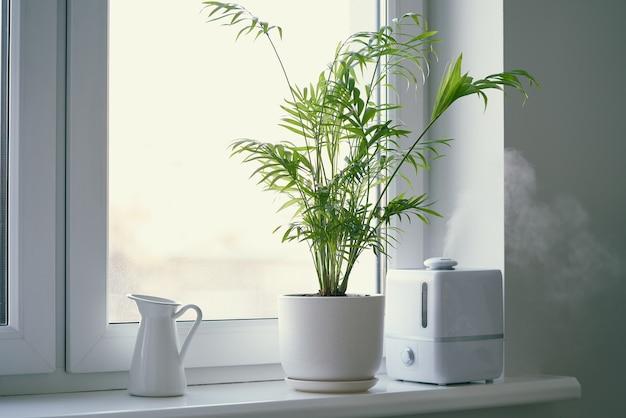 Umidificatore e fiore chamaedorea in vaso sulla finestra