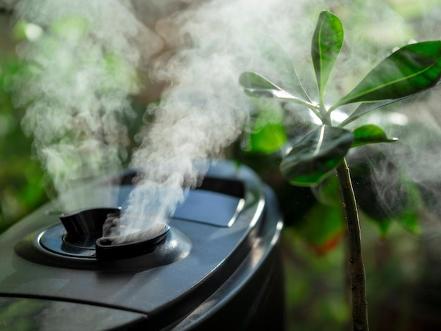 Umidificatore per fiori. umidificatore d'aria sulla finestra di casa, direzione del vapore acqueo verso una pianta d'appartamento.