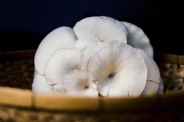 Ostrica ungherese o fungo ungherese in fattoria in thailandia. Foto Premium