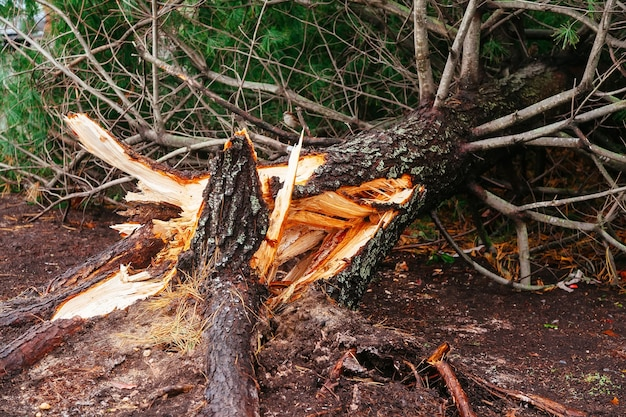 Alluvione dell'uragano e danni del vento
