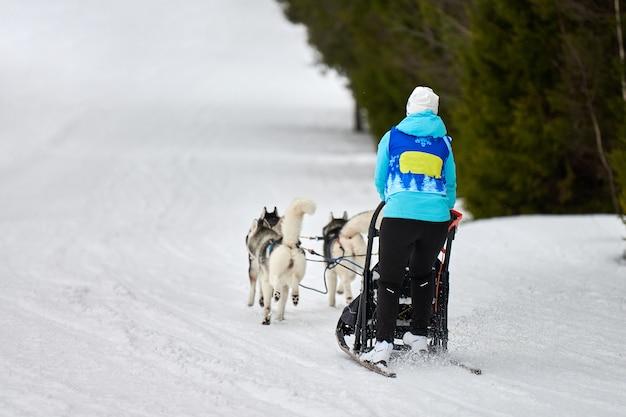 Corse di cani da slitta husky. concorso a squadre di slitte trainate da cani invernali. i cani husky siberiani tirano la slitta con musher. corsa attiva su strada innevata