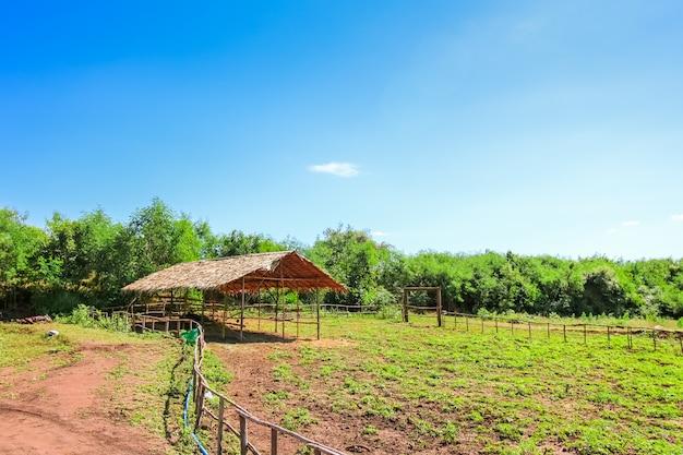 Capanna nella zona di agricoltura sul paesaggio rurale - stagno, prati con cielo blu e nuvole